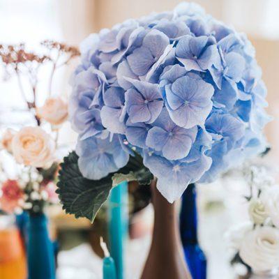 dekoracje wesela z błękitnej hortensji